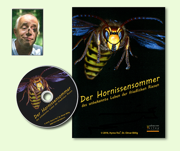 dvd Hornissensommer
